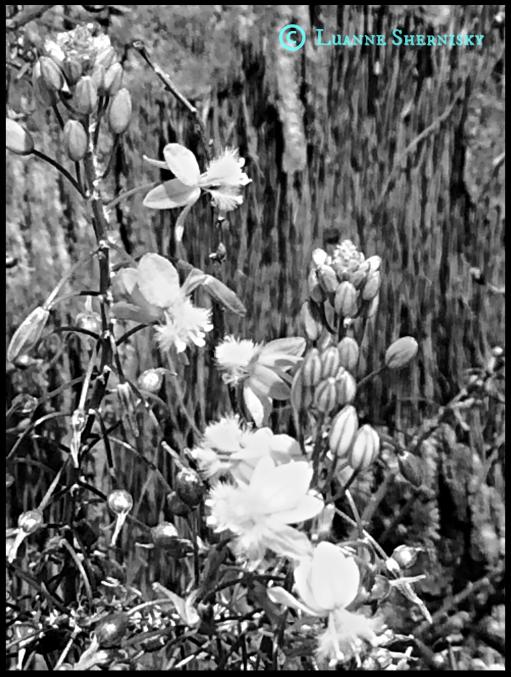 BW Flowers2