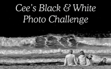 Cee's BW Photo Challenge
