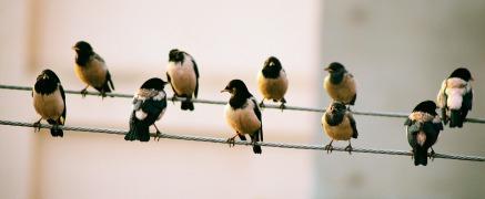 birds-on-wire-rev