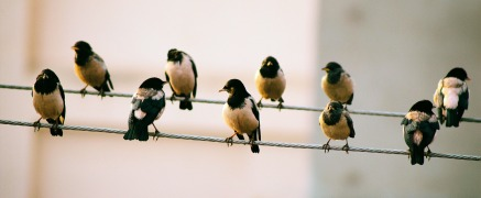 birds-on-wire-rev