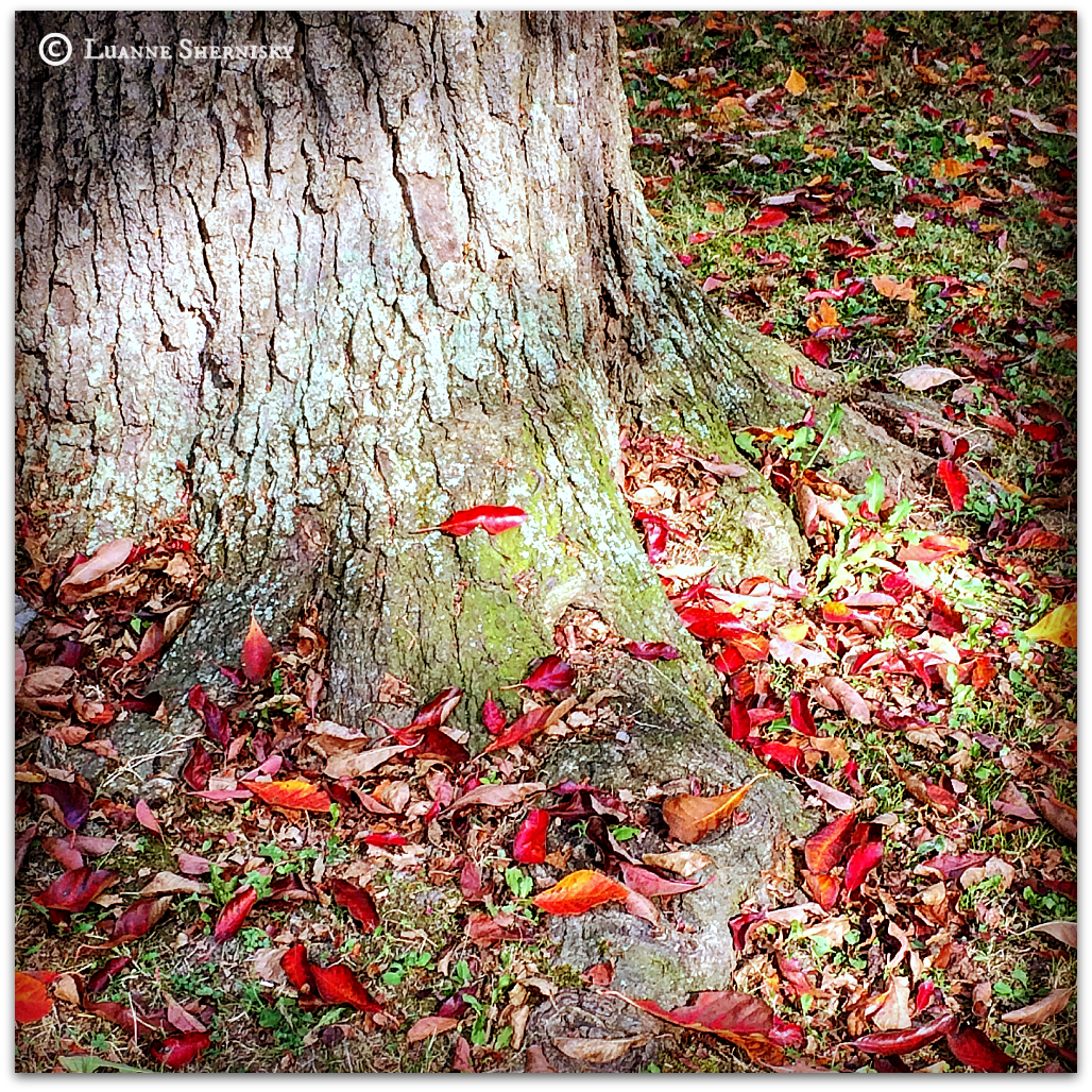 Red autumn leaves scattered around the base of a tree