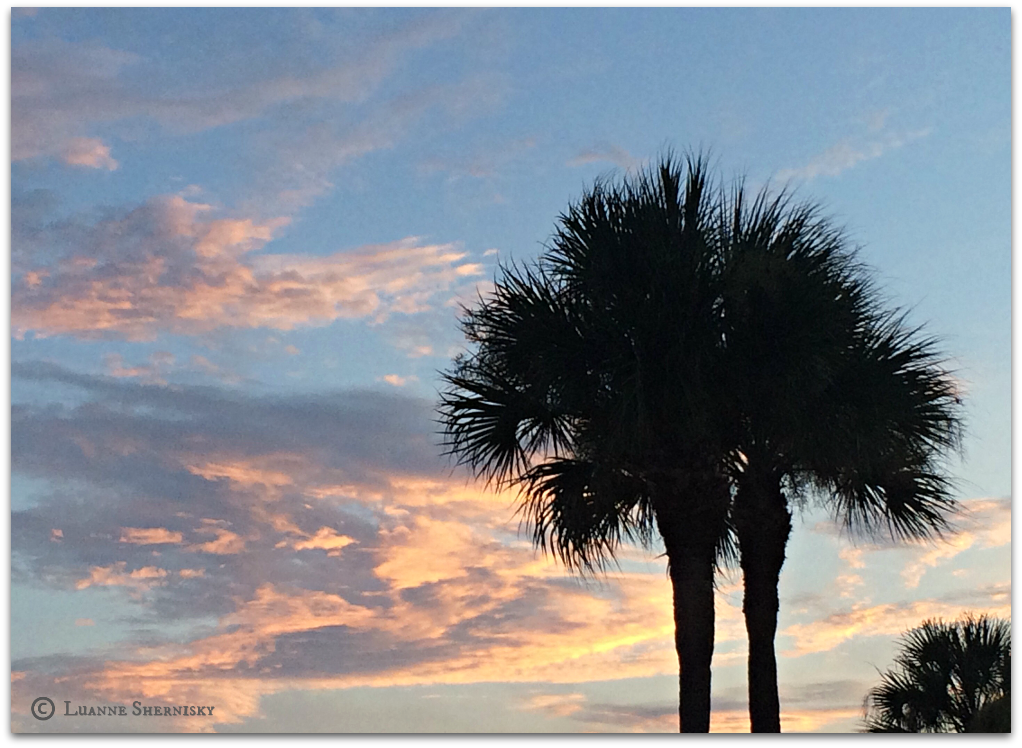 Silhouette of palm trees against the sunset