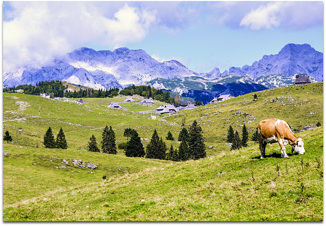 Beautiful landscape shot of cow on hill in foreground and mountains in background