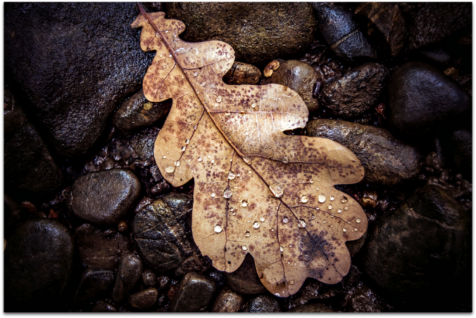 Brown leaf with rain droplets lying on a bed of dark, wet stones