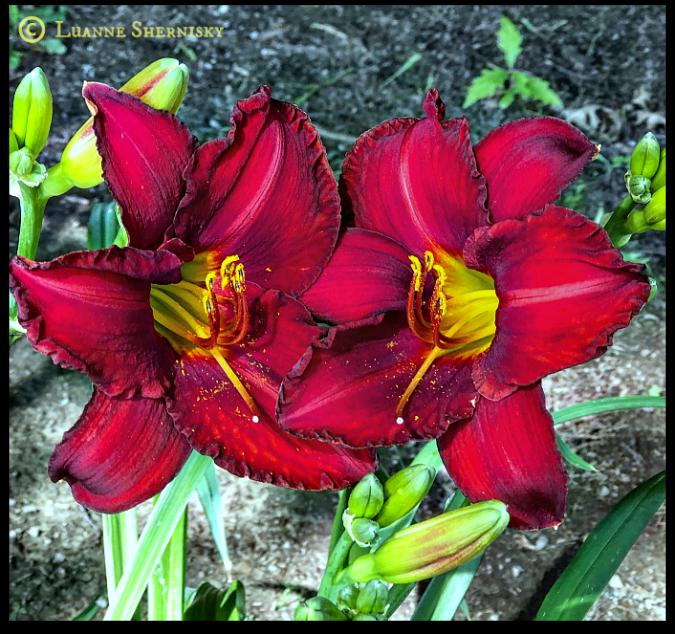 Flower_8:26