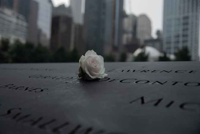 Close up photo of white rose on 9-11 memorial