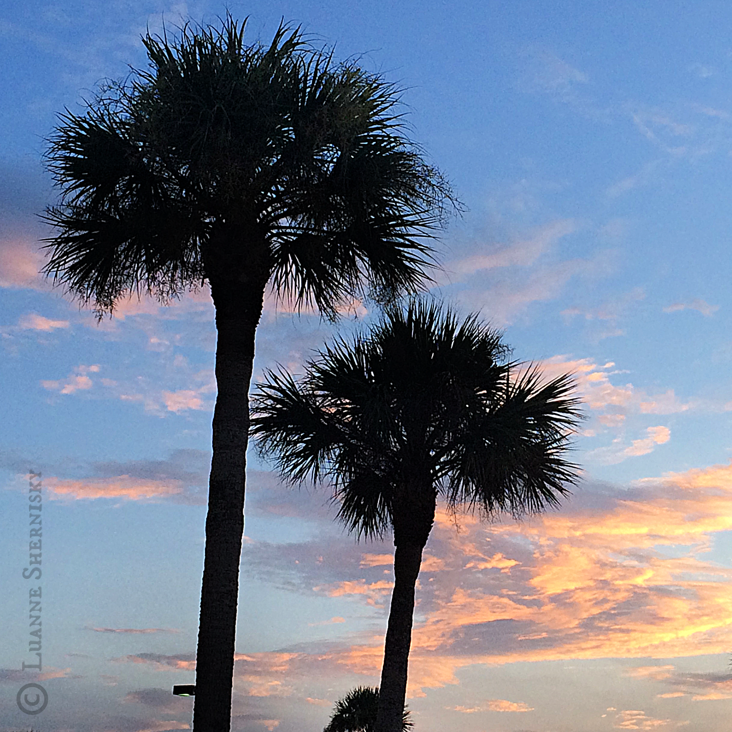 Silhouette of two palm trees against the sunset